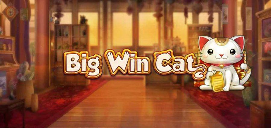 Big Win Cat-slot-main