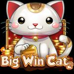 Big Win Cat - The Cat