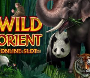 wildorient-slot-main