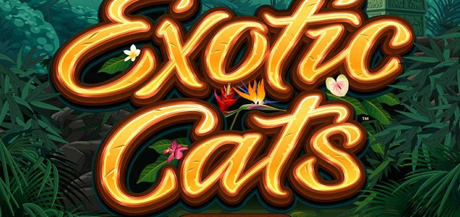 Exotic Cats slot main