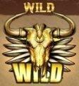 golden colts wild
