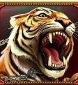 Tiger symbol Game of Gladiators