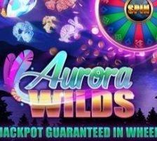 Aurora Wilds 270 x 218