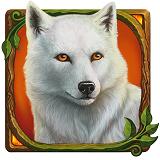 Druids Dream White Wolf
